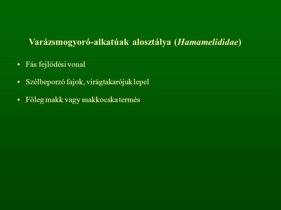 Varázsmogyoró-alkatúak alosztálya (Hamamelididae)