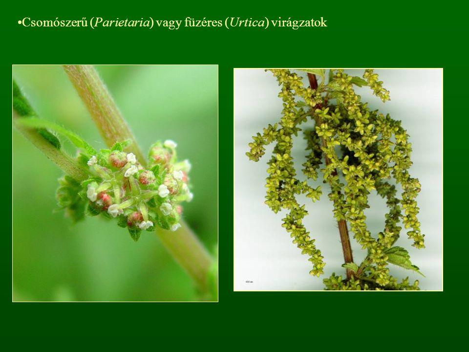 Csomószerű (Parietaria) vagy füzéres (Urtica) virágzatok