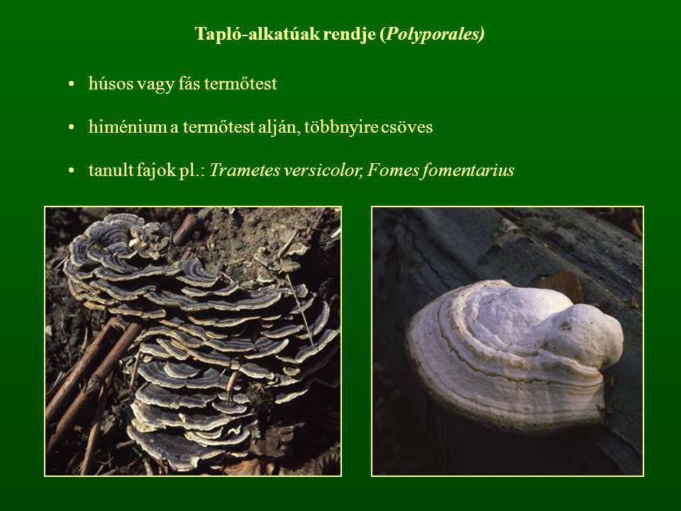 Tapló-alkatúak rendje (Polyporales)
