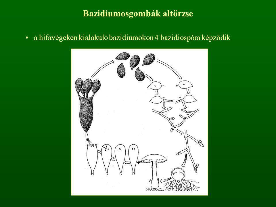 Bazidiumosgombák altörzse