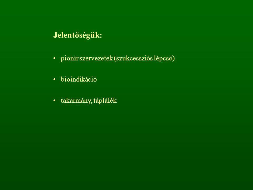 Jelentőségük: pionír szervezetek (szukcessziós lépcső) bioindikáció