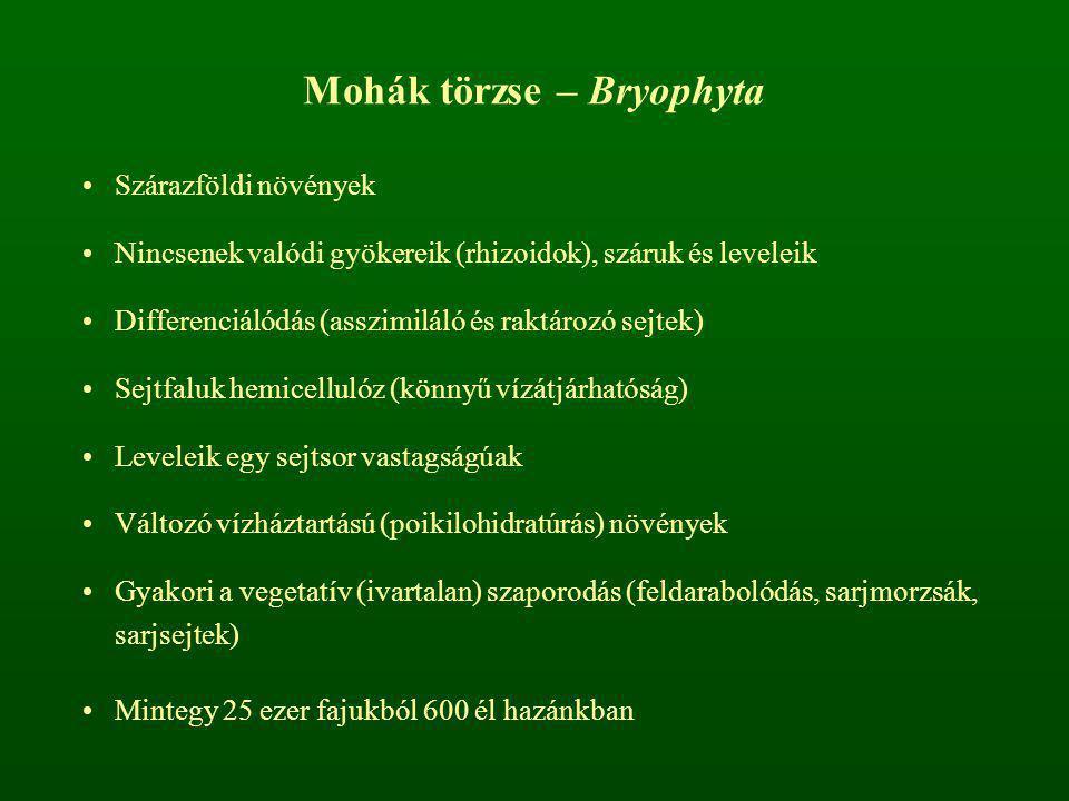 Mohák törzse – Bryophyta