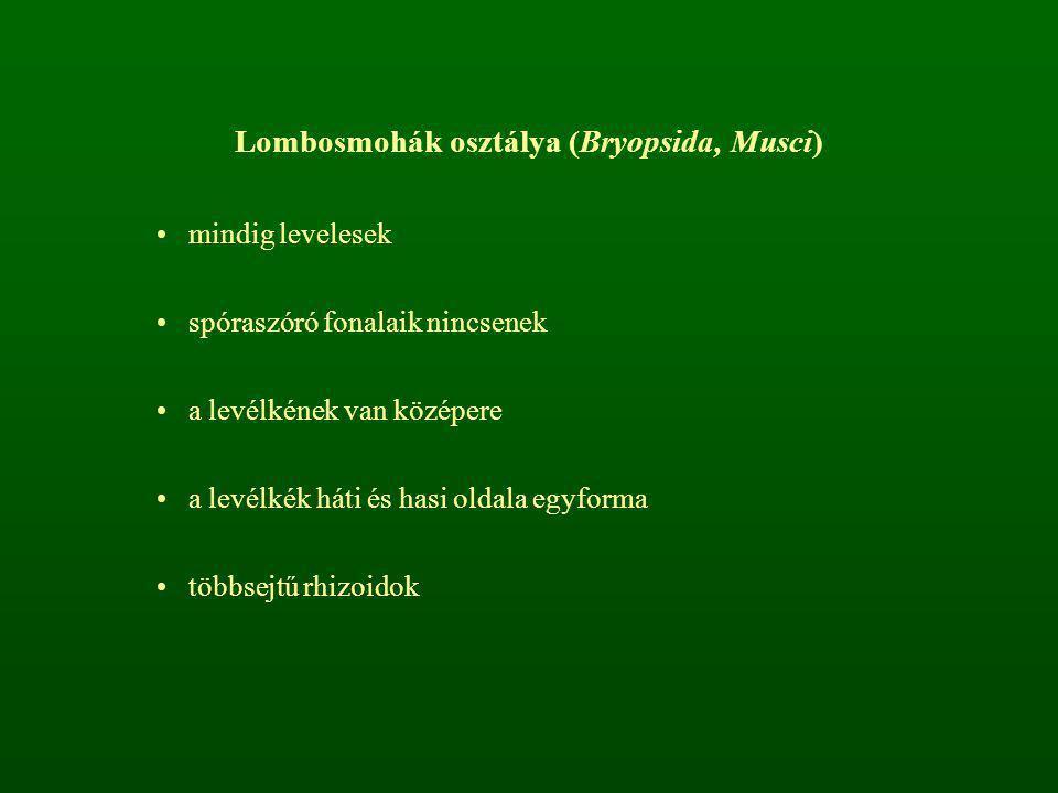 Lombosmohák osztálya (Bryopsida, Musci)
