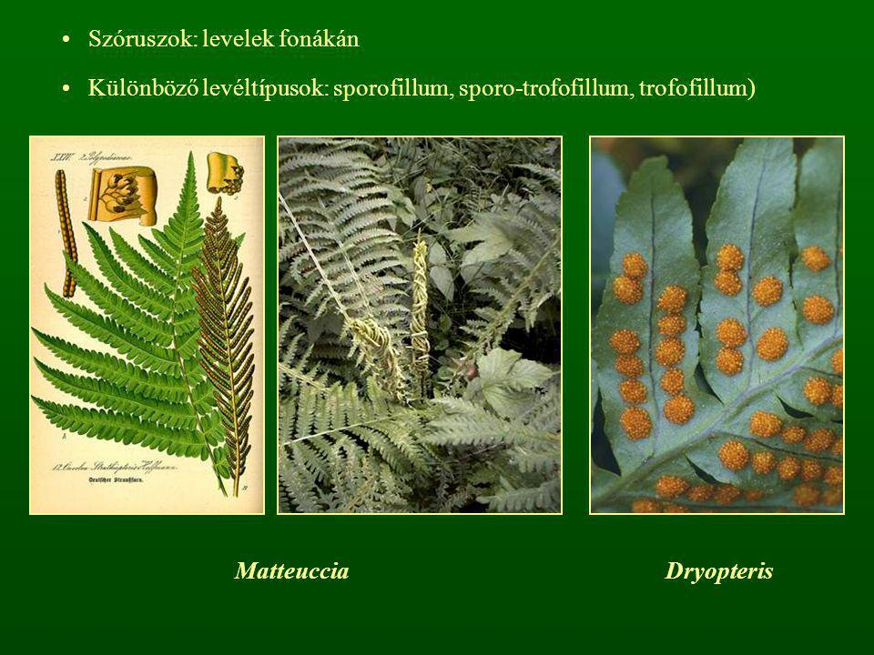 Szóruszok: levelek fonákán