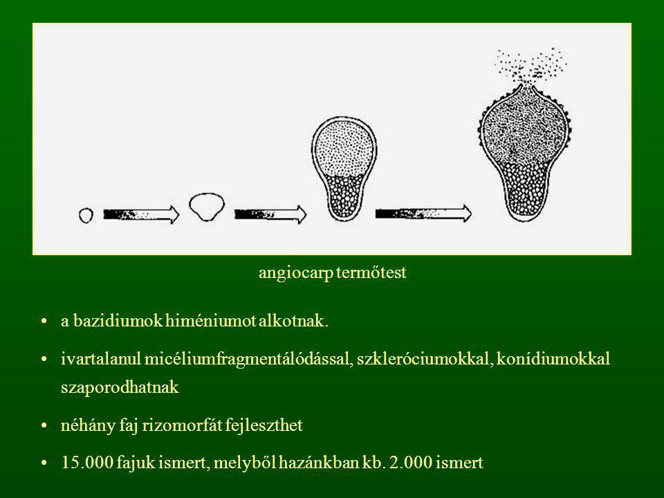 angiocarp termőtest a bazidiumok himéniumot alkotnak. ivartalanul micéliumfragmentálódással, szkleróciumokkal, konídiumokkal szaporodhatnak.