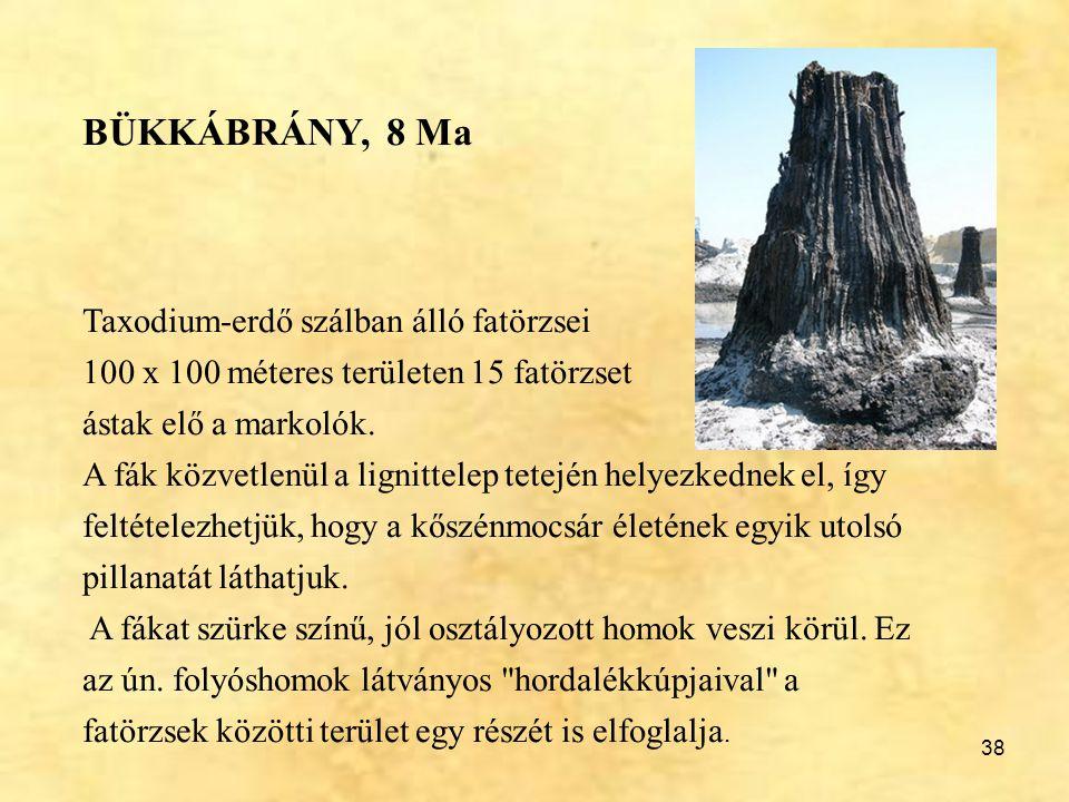 BÜKKÁBRÁNY, 8 Ma Taxodium-erdő szálban álló fatörzsei