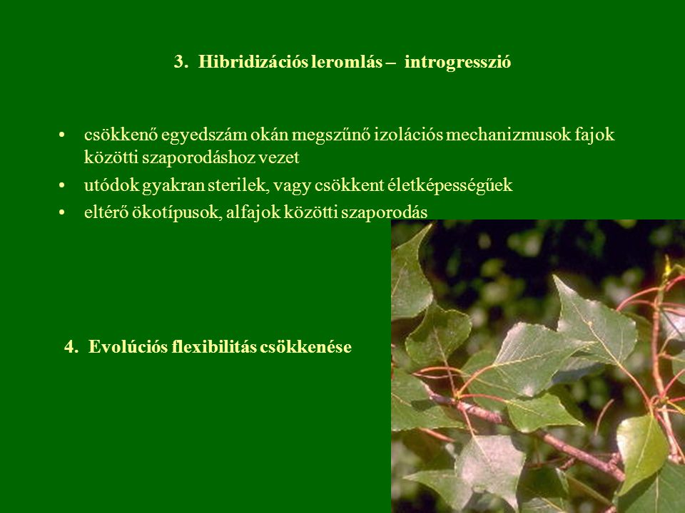 3. Hibridizációs leromlás – introgresszió