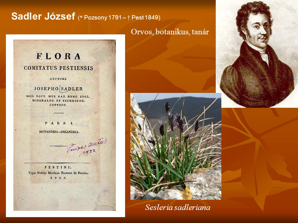 Sadler József (* Pozsony 1791 – † Pest 1849)