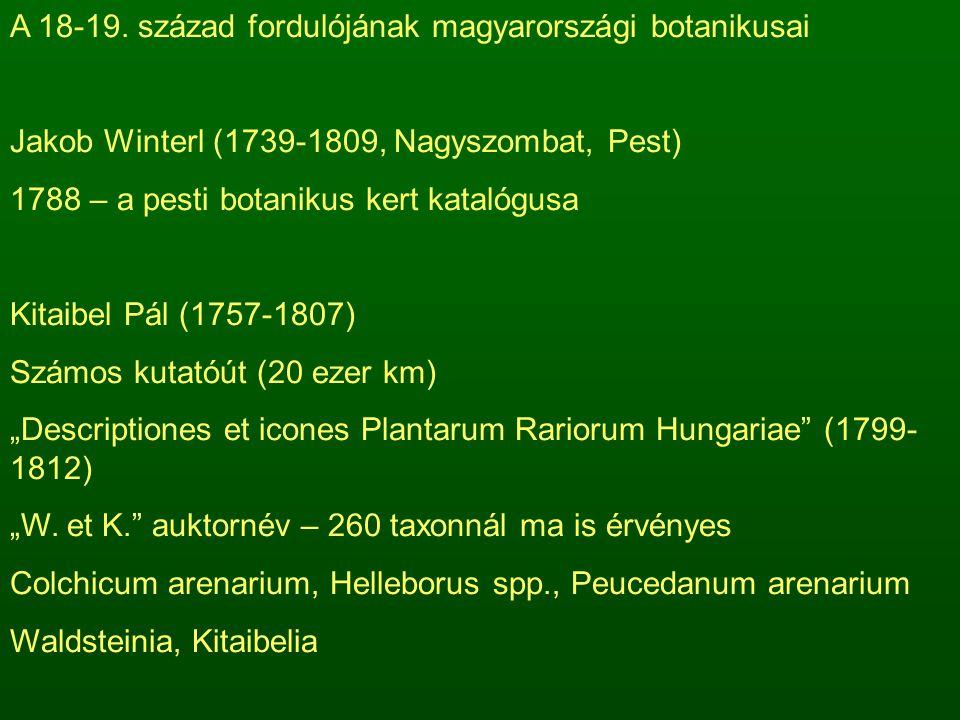 A 18-19. század fordulójának magyarországi botanikusai