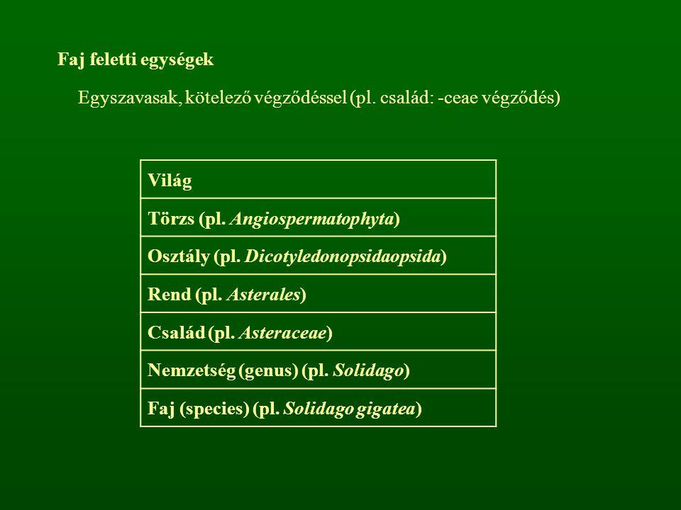 Faj feletti egységek Egyszavasak, kötelező végződéssel (pl. család: -ceae végződés) Világ. Törzs (pl. Angiospermatophyta)