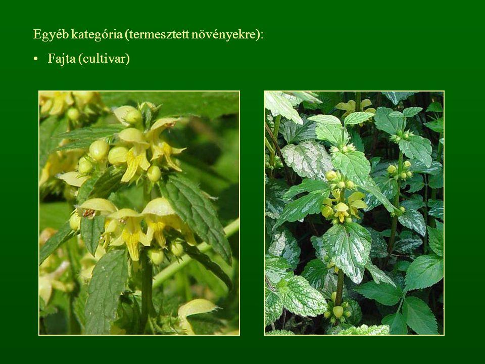 Egyéb kategória (termesztett növényekre):