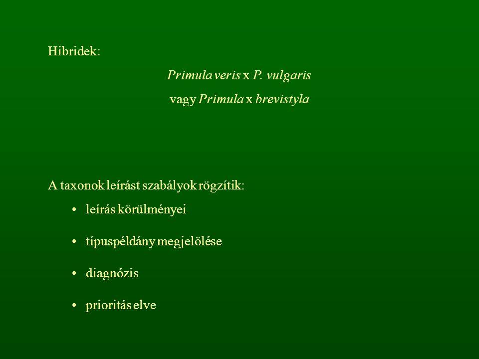 Primula veris x P. vulgaris vagy Primula x brevistyla