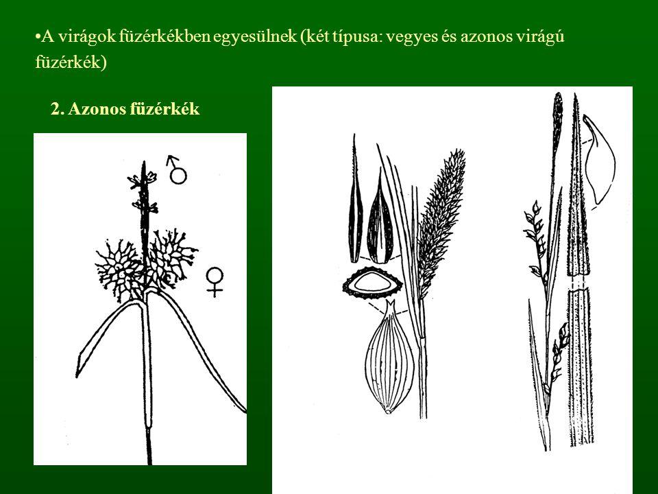 A virágok füzérkékben egyesülnek (két típusa: vegyes és azonos virágú füzérkék)
