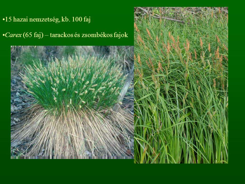15 hazai nemzetség, kb. 100 faj Carex (65 faj) – tarackos és zsombékos fajok