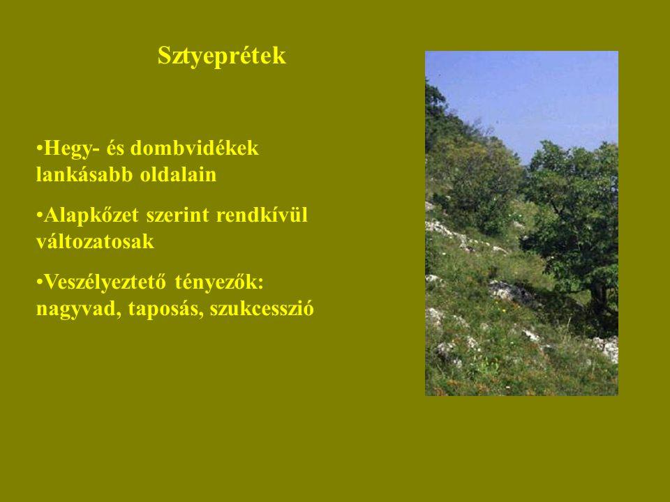 Sztyeprétek Hegy- és dombvidékek lankásabb oldalain