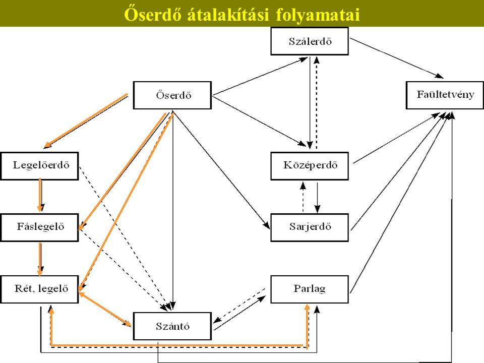 Őserdő átalakítási folyamatai