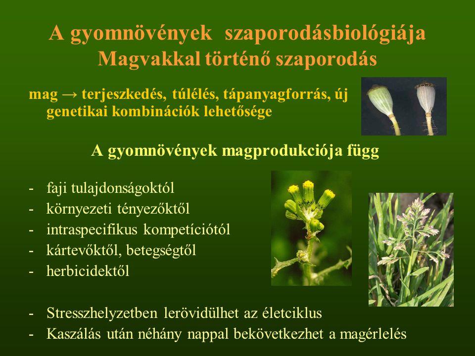 A gyomnövények szaporodásbiológiája Magvakkal történő szaporodás