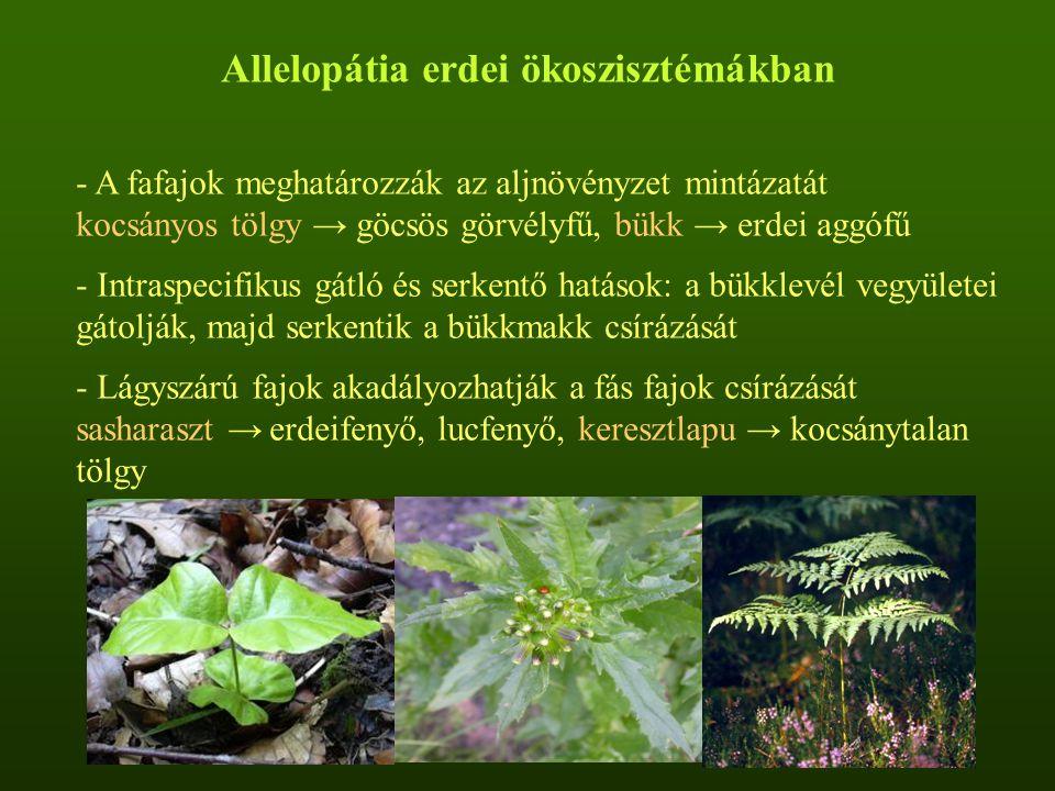 Allelopátia erdei ökoszisztémákban