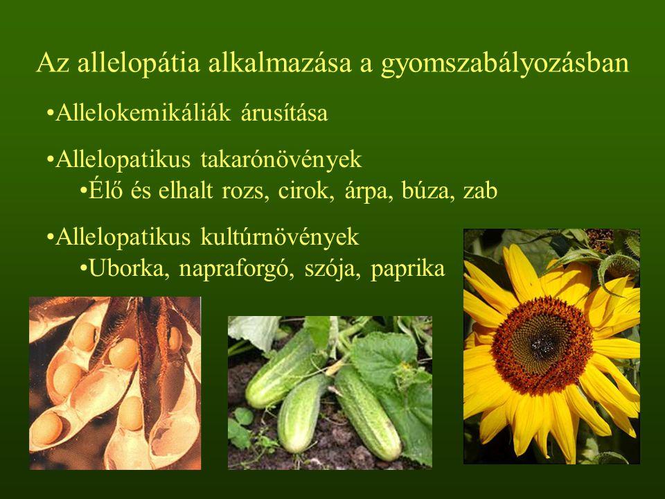 Az allelopátia alkalmazása a gyomszabályozásban