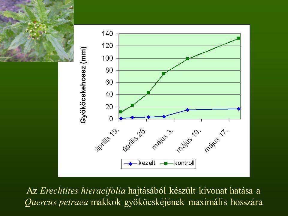 Az Erechtites hieracifolia hajtásából készült kivonat hatása a Quercus petraea makkok gyököcskéjének maximális hosszára