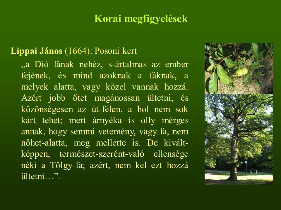Korai megfigyelések Lippai János (1664): Posoni kert