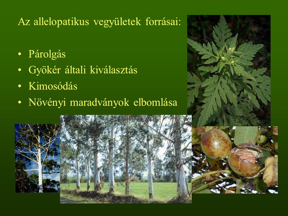 Az allelopatikus vegyületek forrásai: