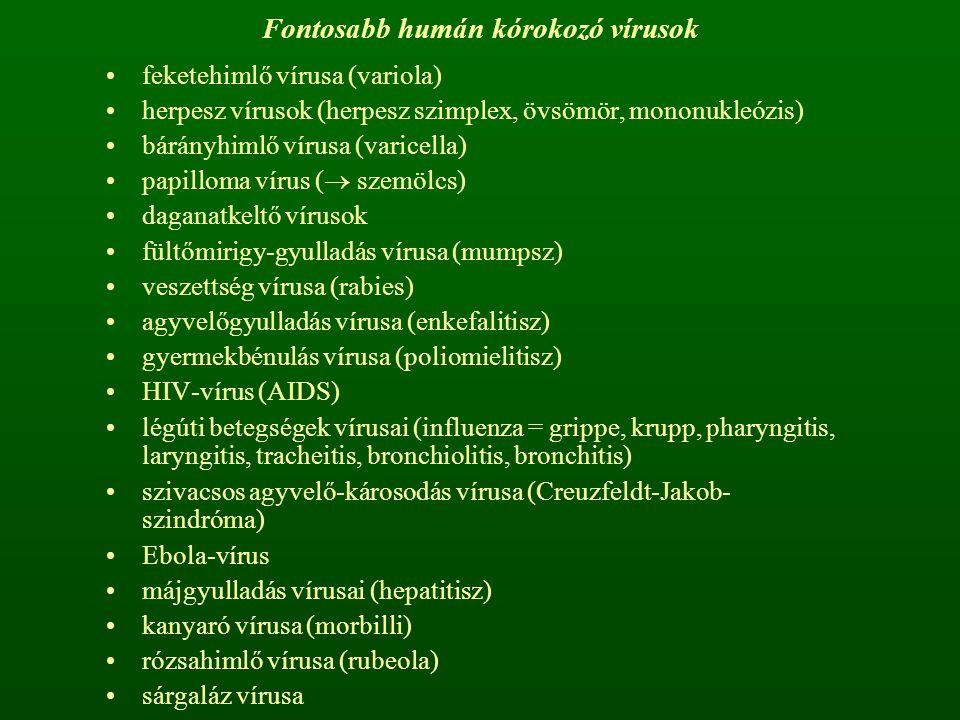 Fontosabb humán kórokozó vírusok