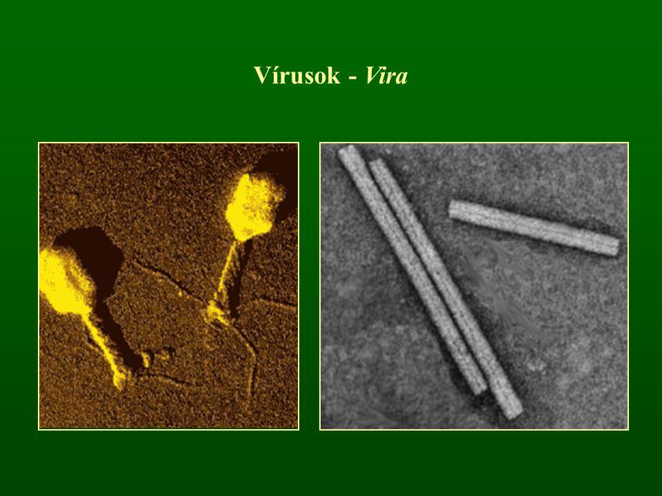 Vírusok - Vira
