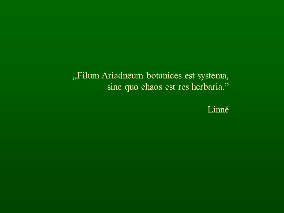 """""""Filum Ariadneum botanices est systema, sine quo chaos est res herbaria. Linné"""