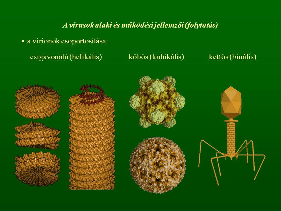 A vírusok alaki és működési jellemzői (folytatás)