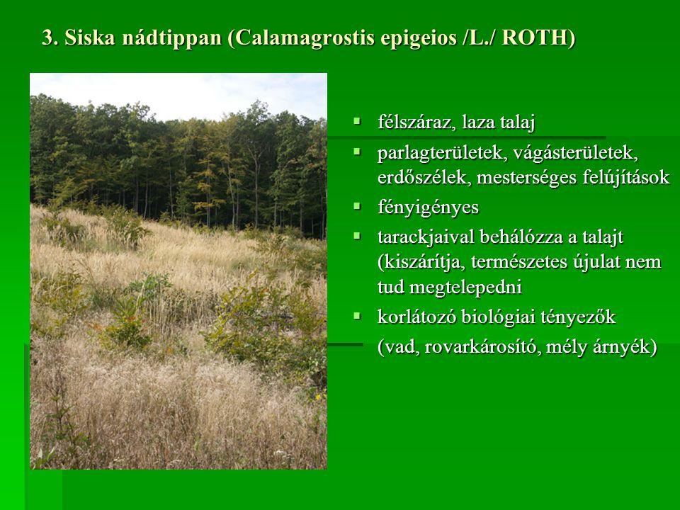 3. Siska nádtippan (Calamagrostis epigeios /L./ ROTH)