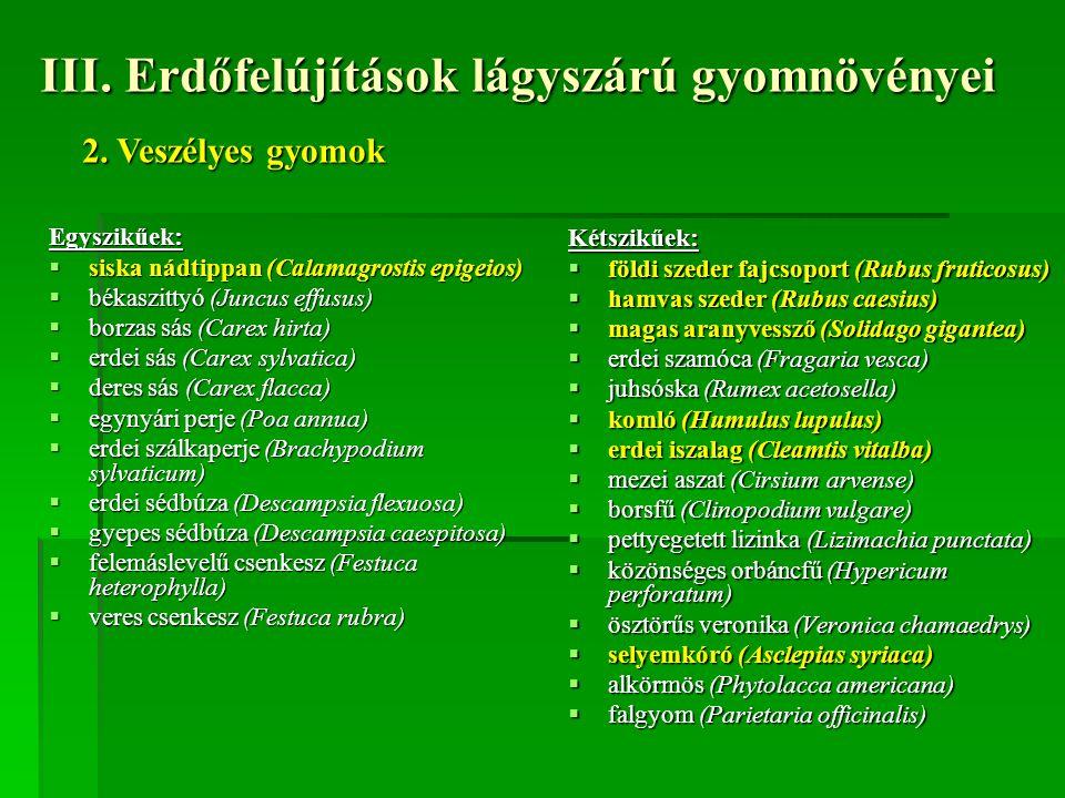III. Erdőfelújítások lágyszárú gyomnövényei