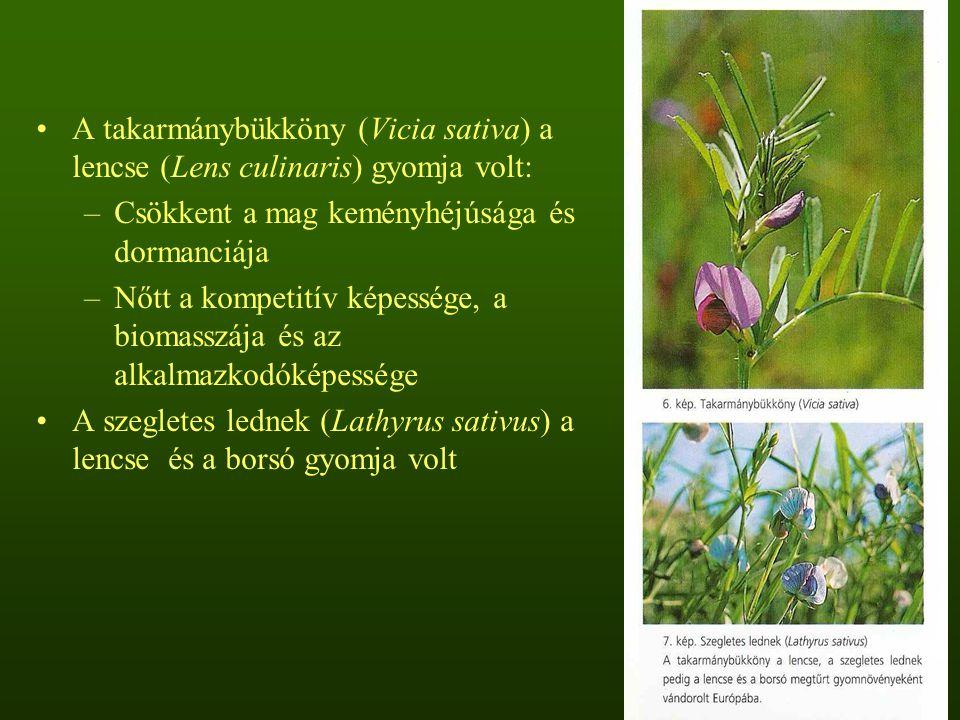 A takarmánybükköny (Vicia sativa) a lencse (Lens culinaris) gyomja volt: