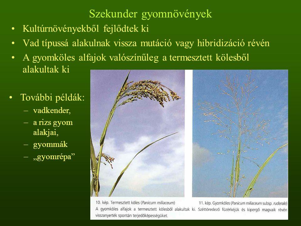Szekunder gyomnövények