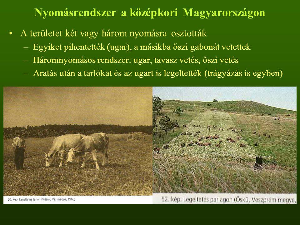 Nyomásrendszer a középkori Magyarországon