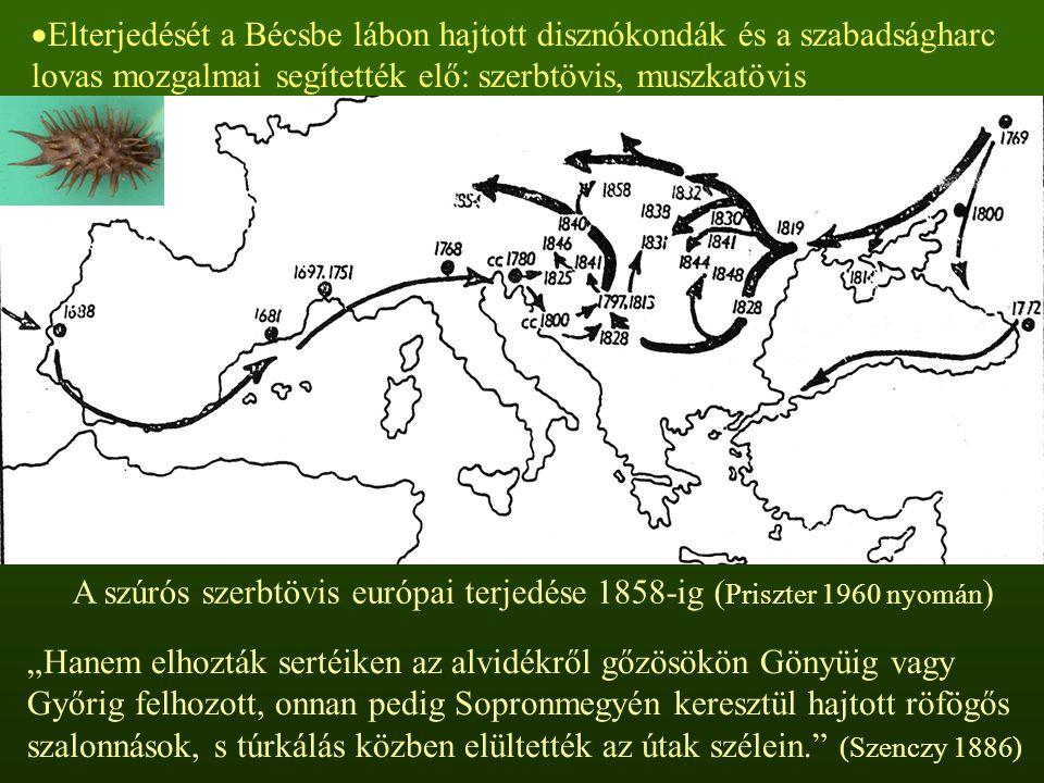 Elterjedését a Bécsbe lábon hajtott disznókondák és a szabadságharc lovas mozgalmai segítették elő: szerbtövis, muszkatövis