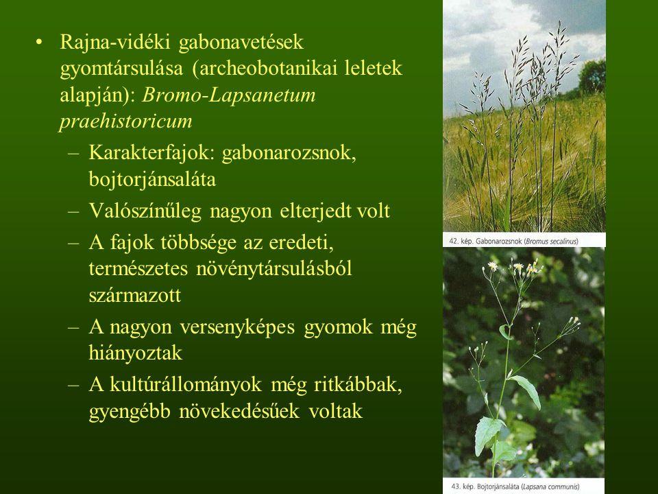 Rajna-vidéki gabonavetések gyomtársulása (archeobotanikai leletek alapján): Bromo-Lapsanetum praehistoricum