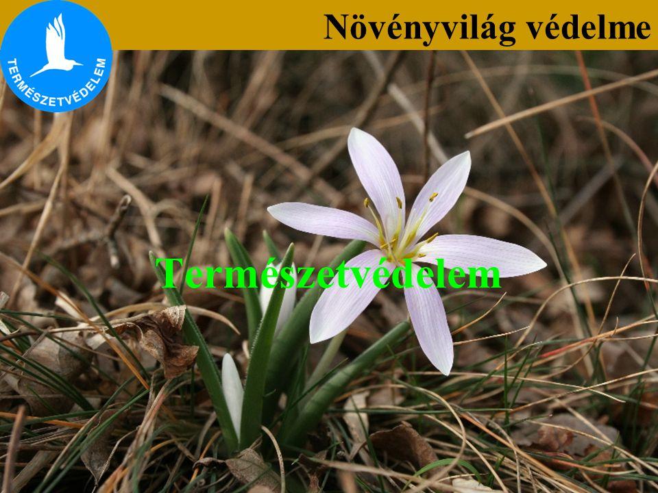 Növényvilág védelme Természetvédelem