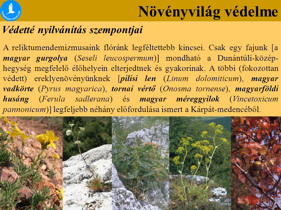 Növényvilág védelme Védetté nyilvánítás szempontjai