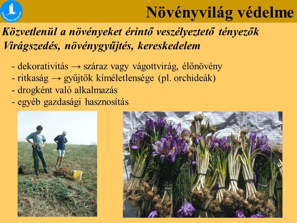 Növényvilág védelme Közvetlenül a növényeket érintő veszélyeztető tényezők. Virágszedés, növénygyűjtés, kereskedelem.