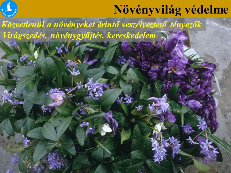 Növényvilág védelme Közvetlenül a növényeket érintő veszélyeztető tényezők.