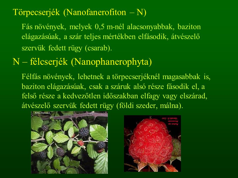 N – félcserjék (Nanophanerophyta)