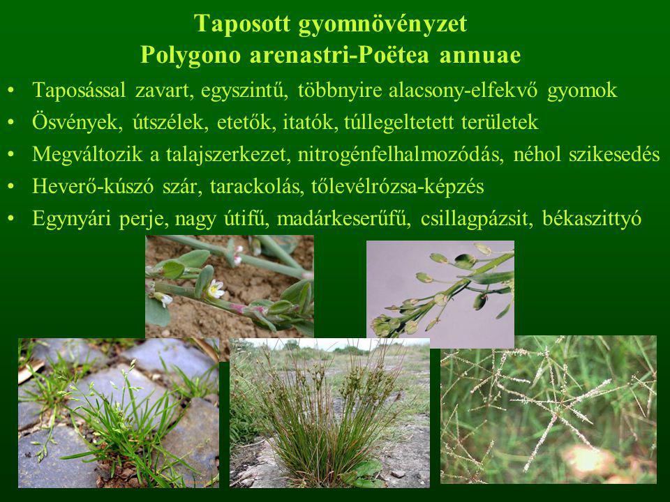 Taposott gyomnövényzet Polygono arenastri-Poëtea annuae