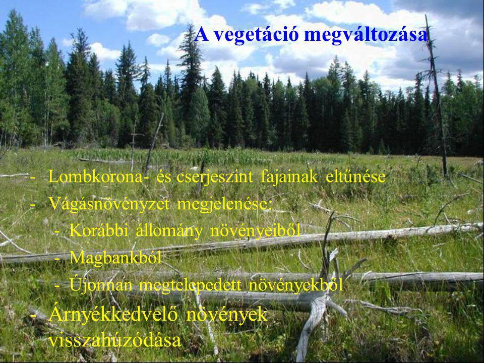 A vegetáció megváltozása