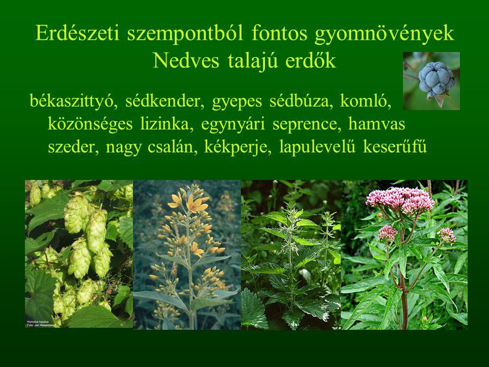 Erdészeti szempontból fontos gyomnövények Nedves talajú erdők