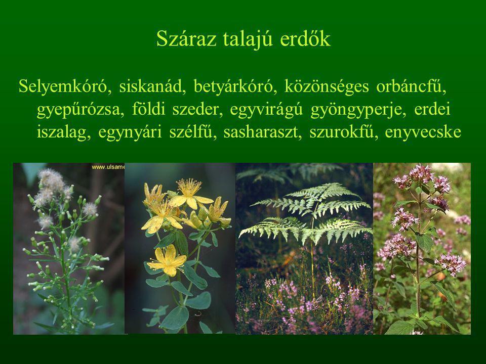 Száraz talajú erdők