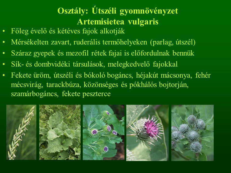 Osztály: Útszéli gyomnövényzet Artemisietea vulgaris