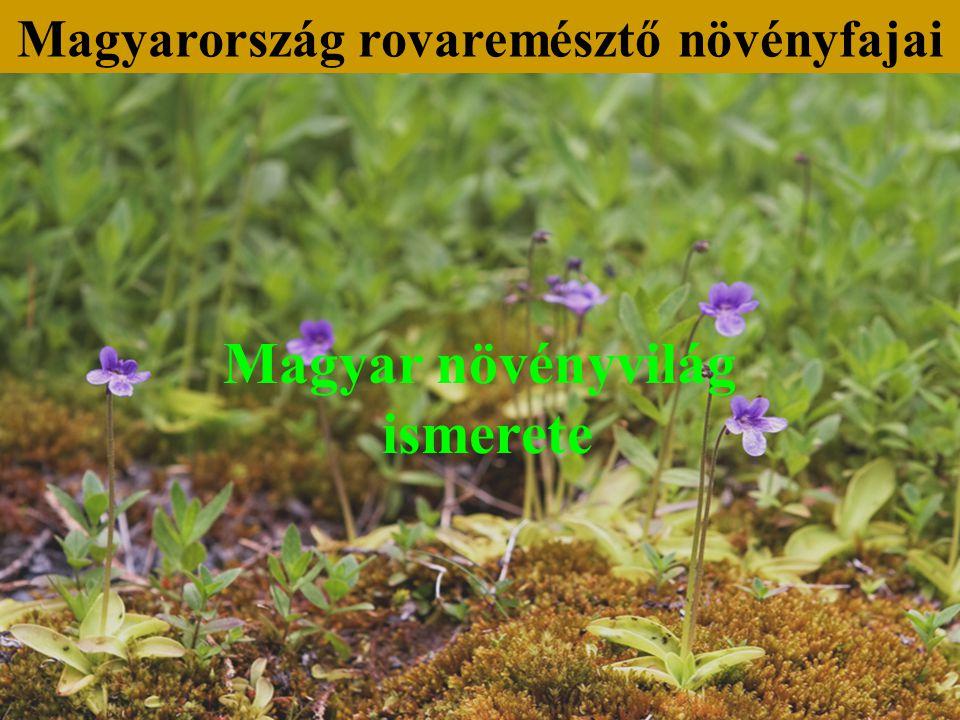 Magyar növényvilág ismerete