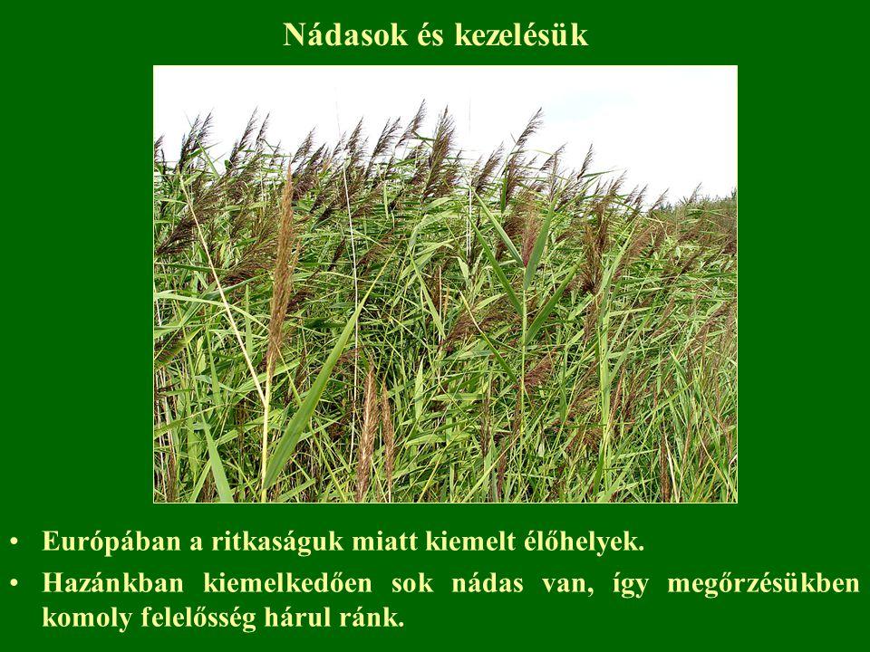 Nádasok és kezelésük Európában a ritkaságuk miatt kiemelt élőhelyek.