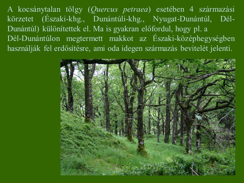 A kocsánytalan tölgy (Quercus petraea) esetében 4 származási körzetet (Északi-khg., Dunántúli-khg., Nyugat-Dunántúl, Dél-Dunántúl) különítettek el. Ma is gyakran előfordul, hogy pl. a